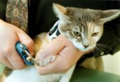 4 Things to Think About Before Declawing your Cat