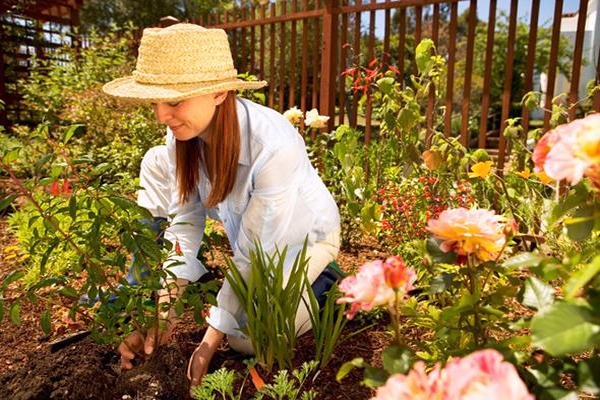 5 Tips For Planting Roses