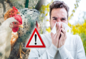 """Bird Flu"": What You Need To Know"